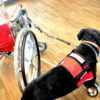 Quick-Release Wheelchair Lead with Shackle Panic Snap